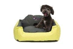 pet, dog basket bed