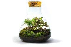 glass garden kit