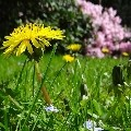 garden, flowers & plants